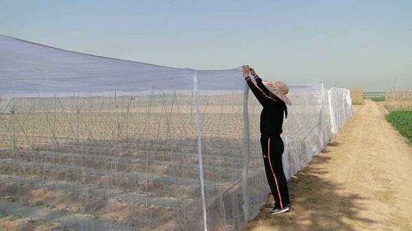 Microfender Insect Netting
